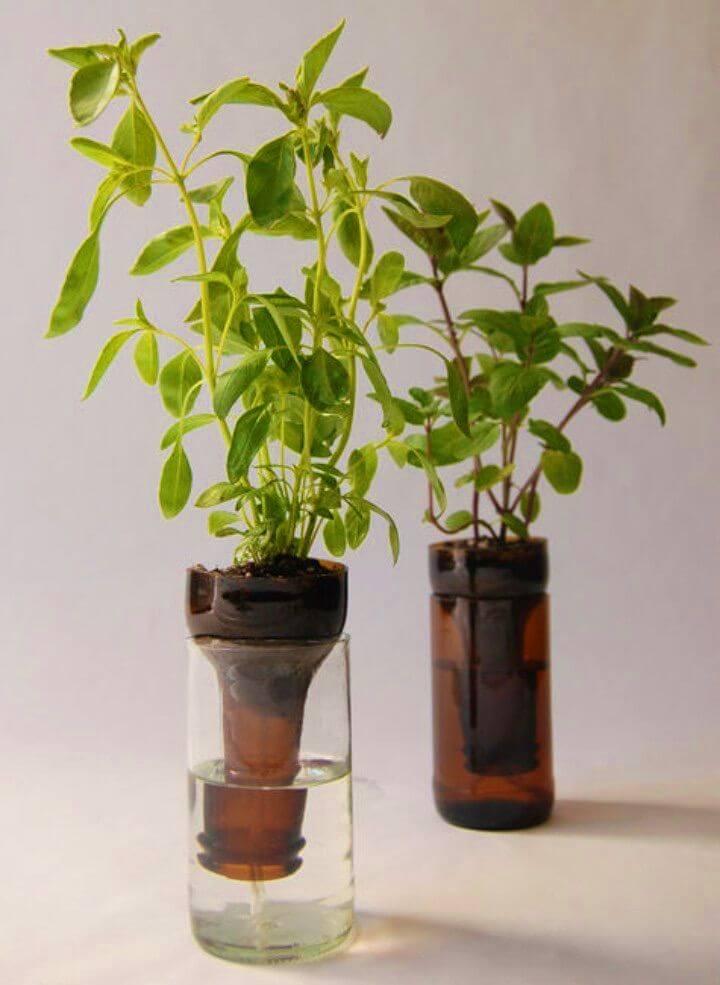 DIY Herb Bottle Gardens