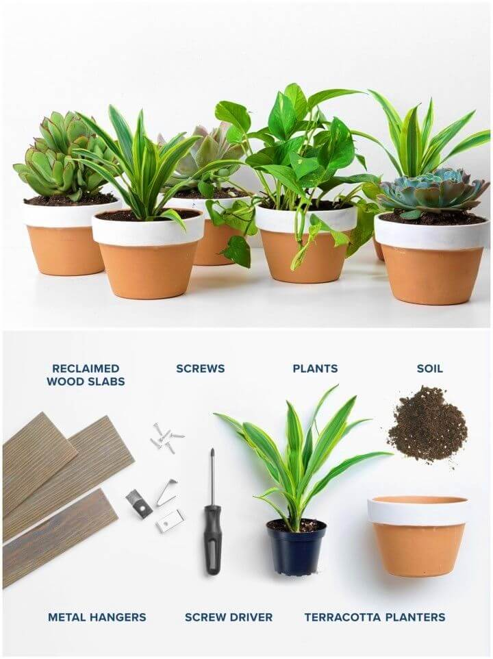 Easy DIY Little Garden for Your Home