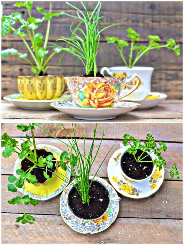 Eco Friendly DIY Herbs in a Teacup