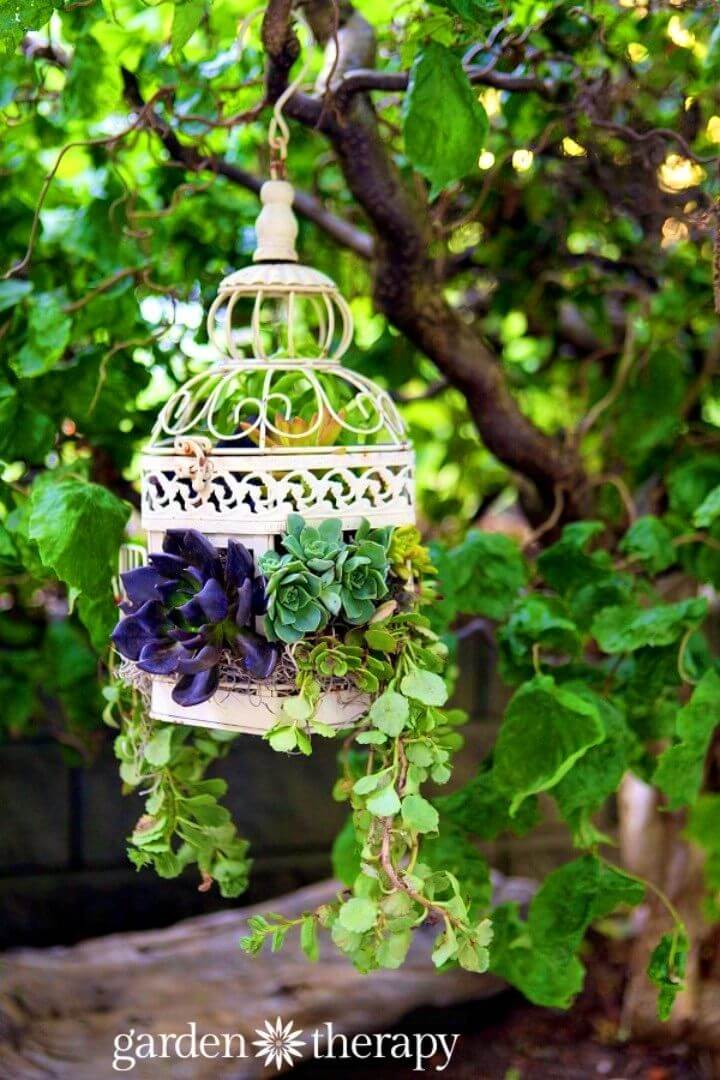 How To Make Birdcage Succulent Planter
