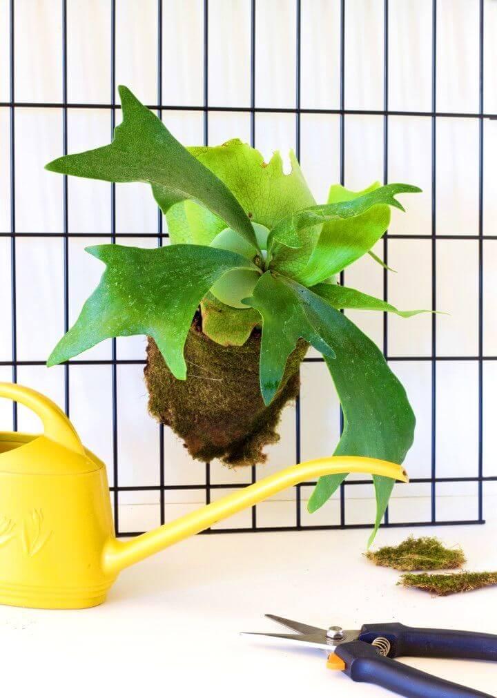 Modern DIY Staghorn Fern Project